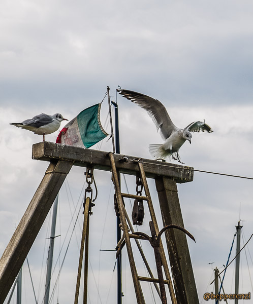 Gabbiani al porto di Pesaro