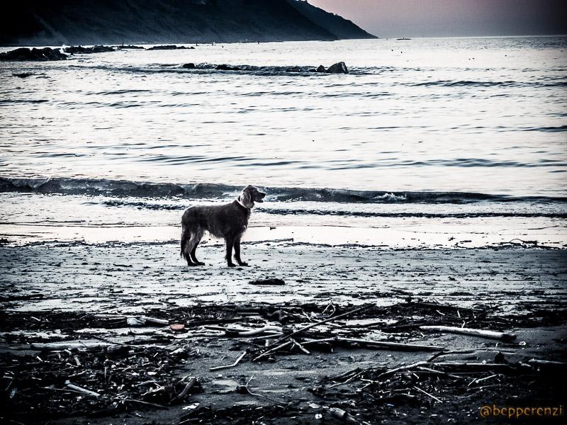 Cane in Spiaggia - Baia Flaminia