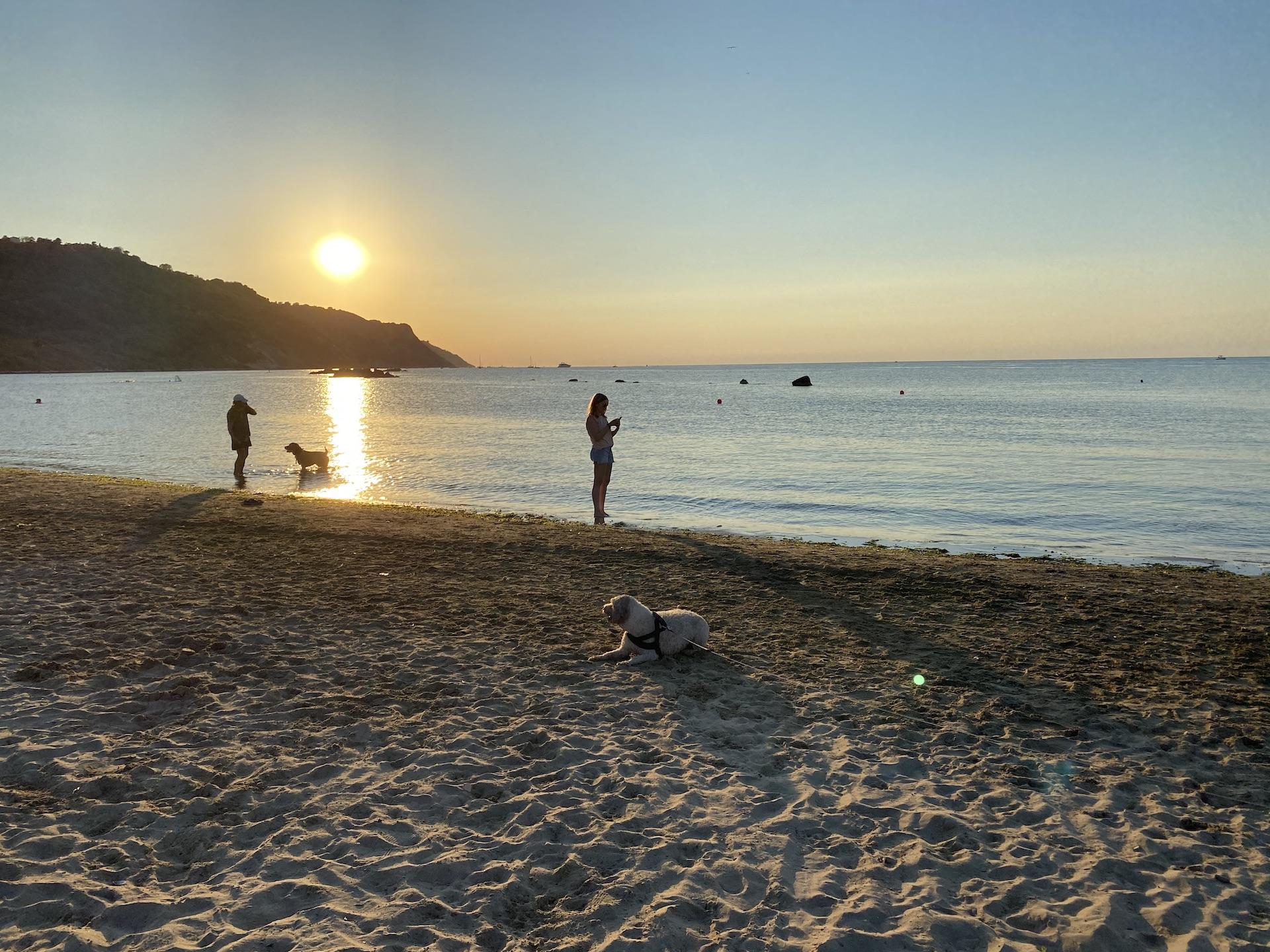 cani al tramonto